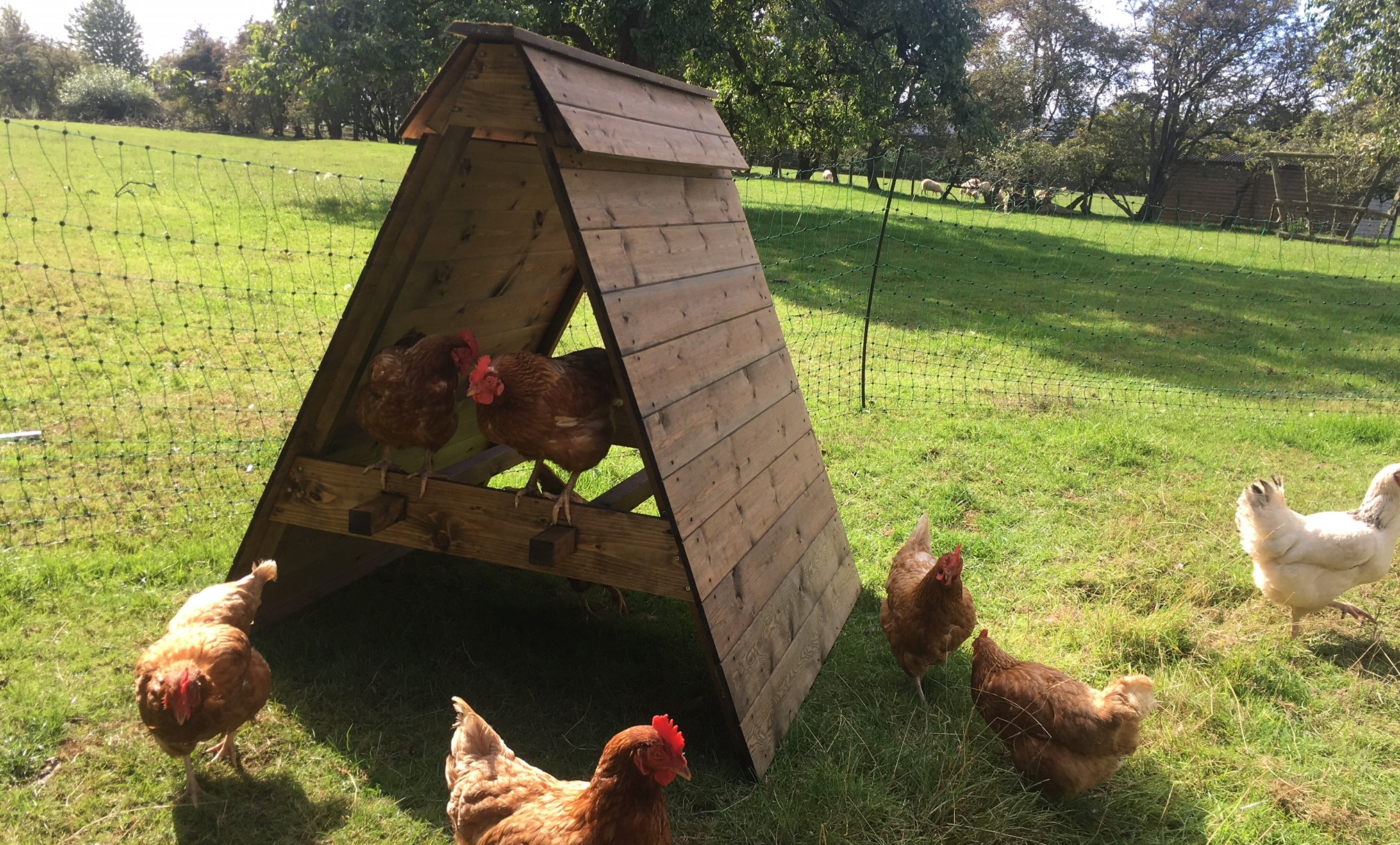 Win a Hen Shelter – October 2018